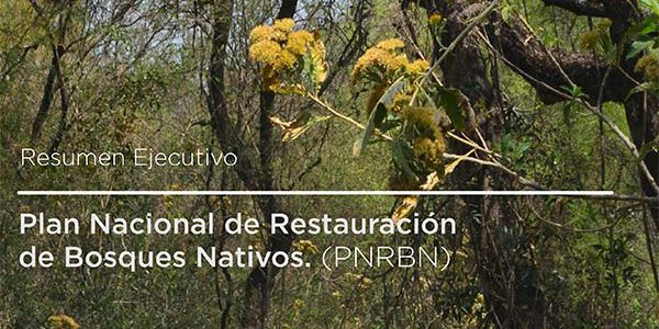 plan-restauracion-bosques